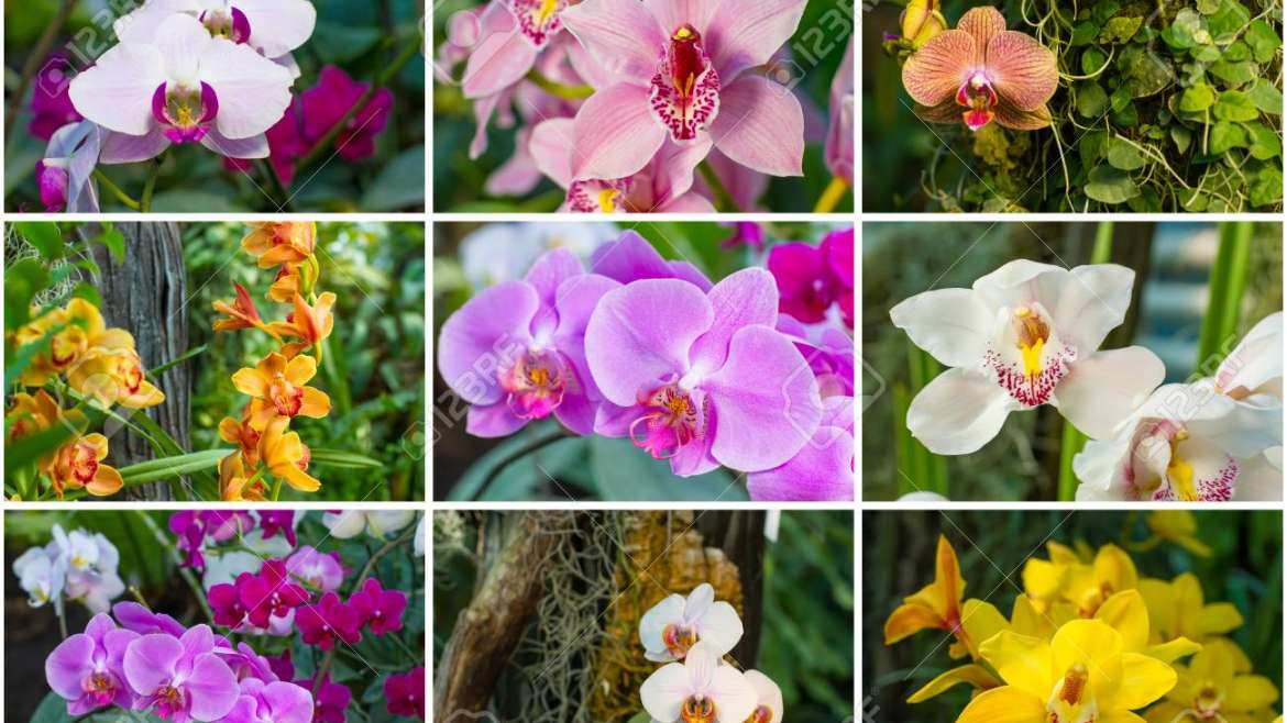 Orchid Care(general)